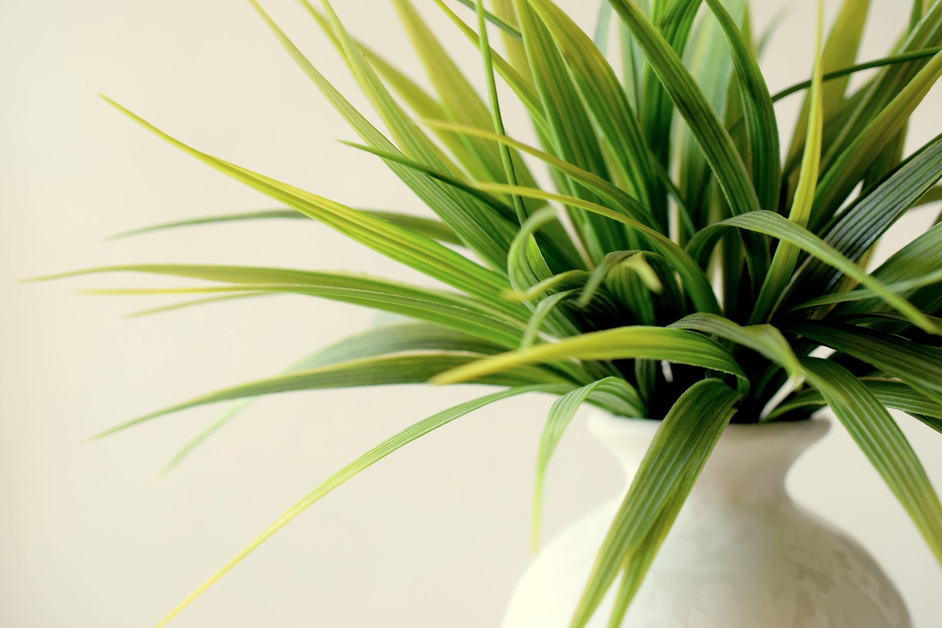 Indoor Gardening & urban gardening